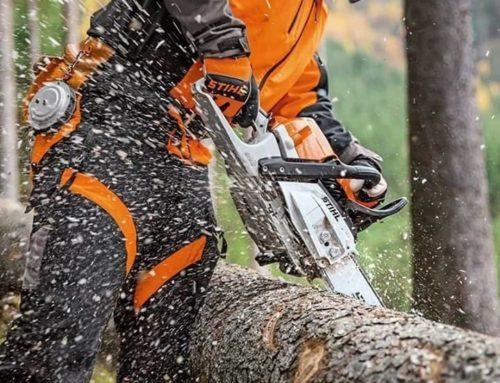 Élagage professionnel des arbres